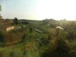 Kayam Farm 2012 089