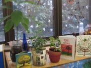 Avocado plants, carob tree, and holiday books